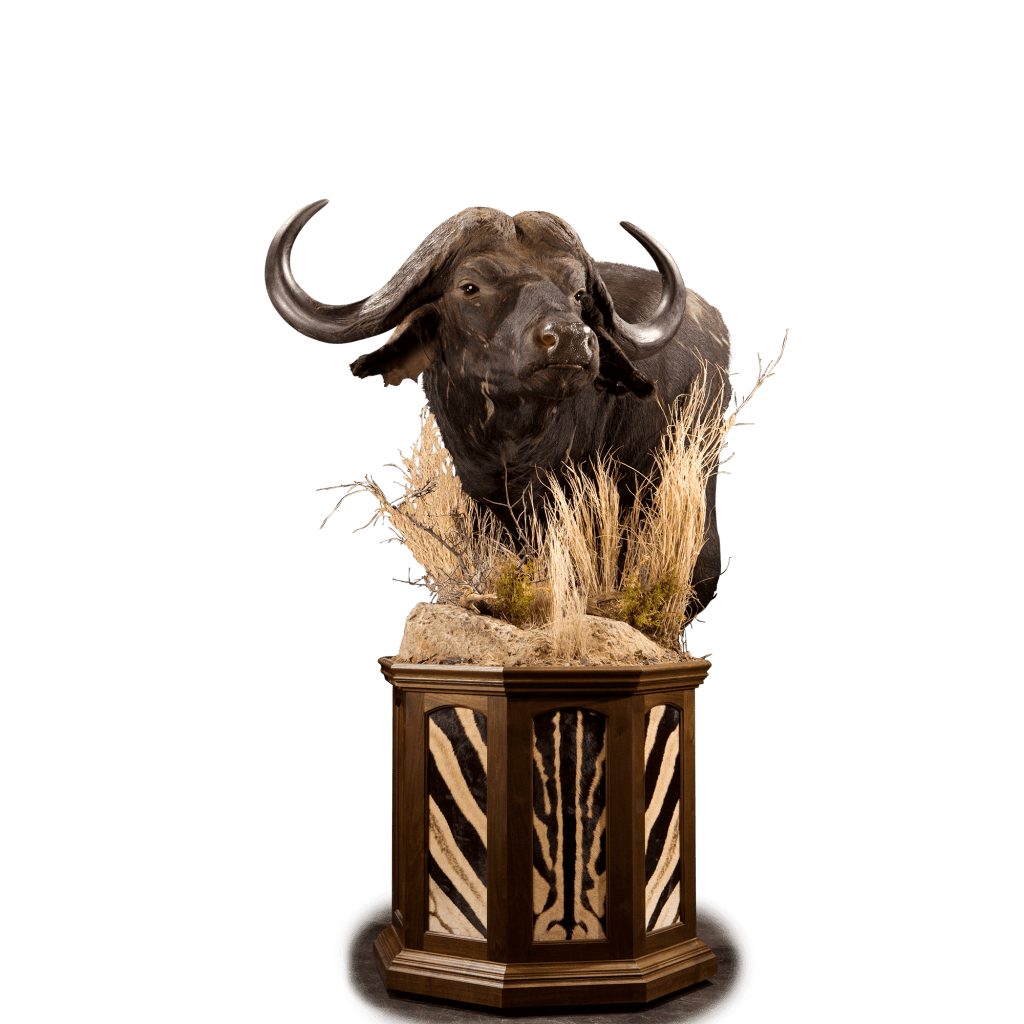 cape buffalo pedestal