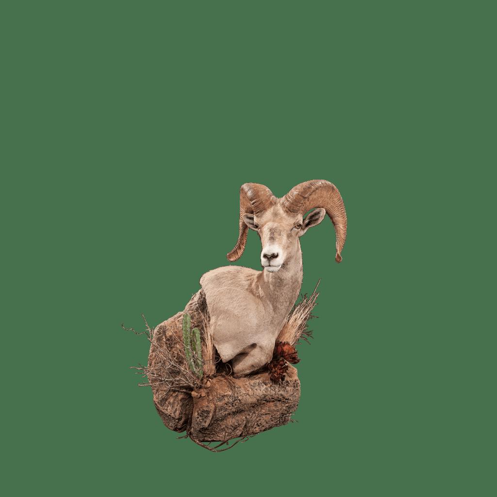 Desert sheep wall pedestal