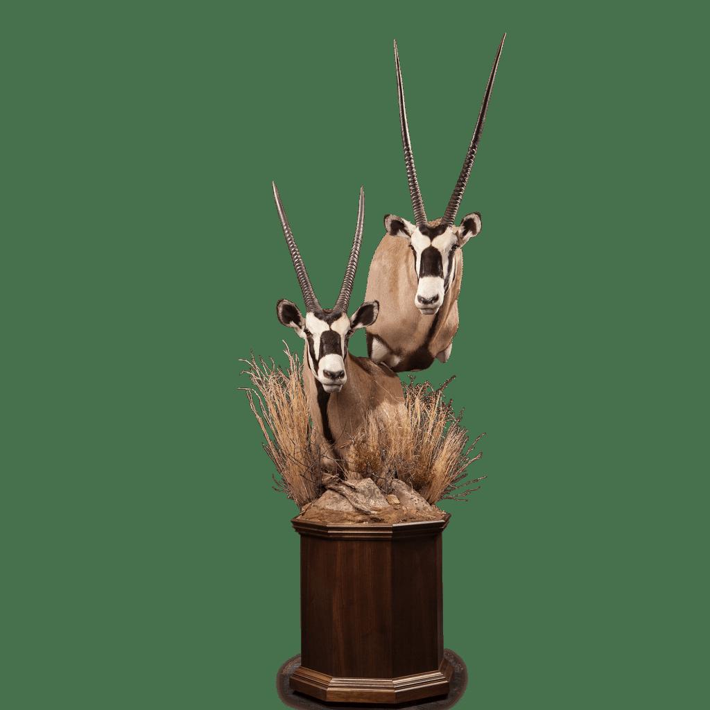gemsbok pedestal mount