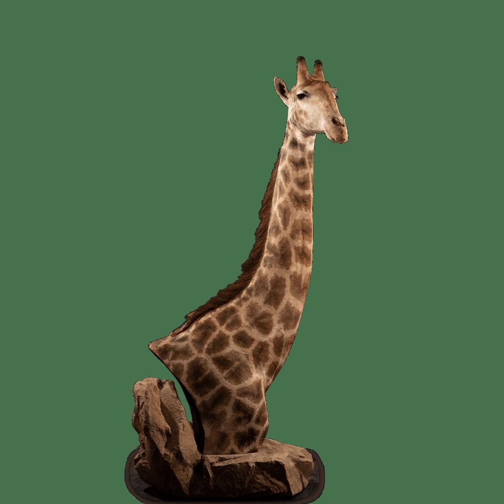 giraffe pedestal mount