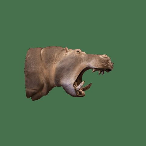 hippo shoulder mount