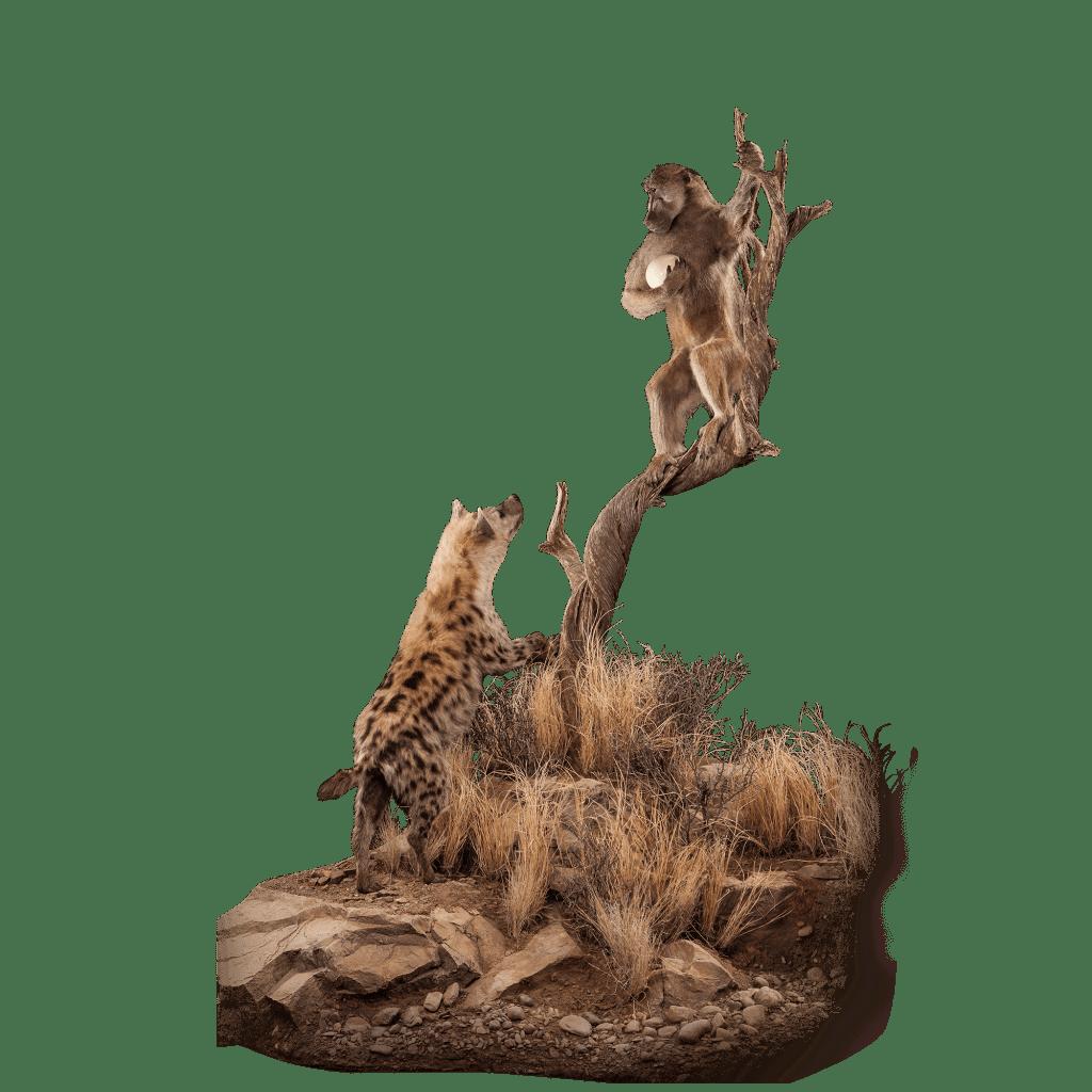 hyena and baboon taxidermy