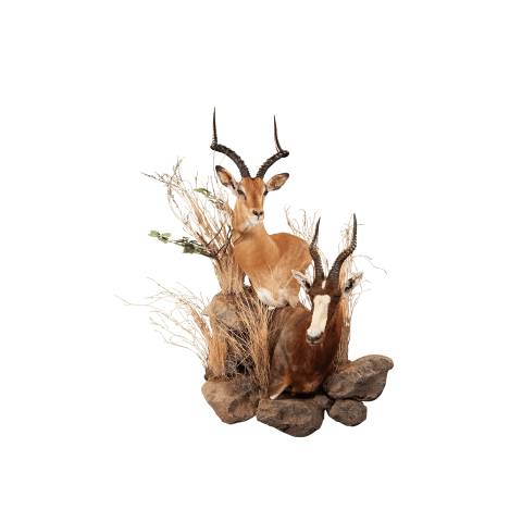 impala and blesbok wall pedestal