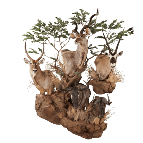multiple african animal shoulder mounts