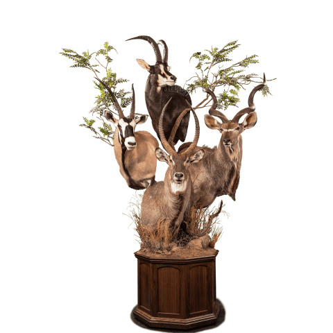 horned african animals pedestal