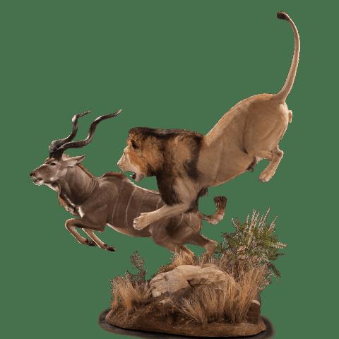 lion hunting kudu taxidermy