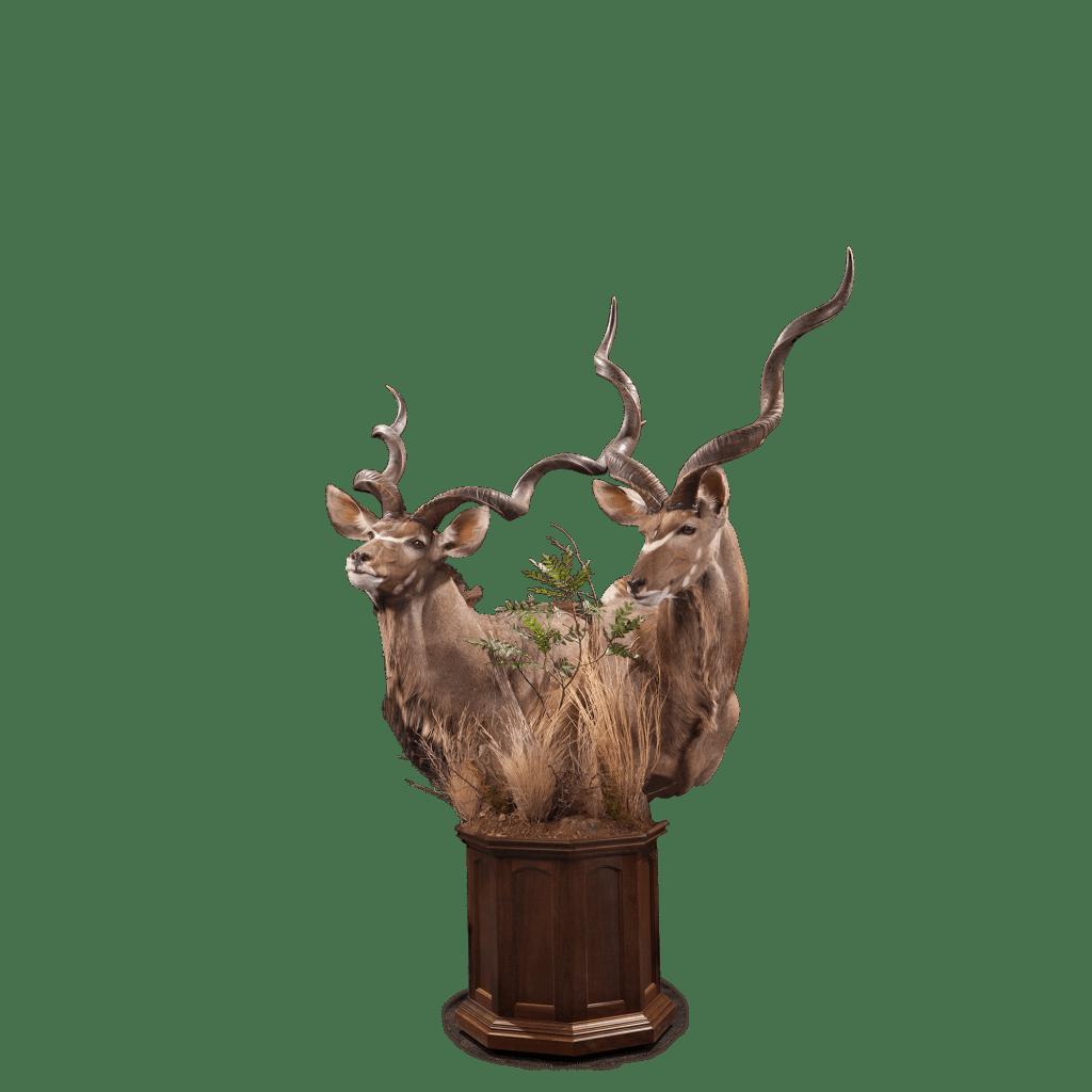 two kudu pedestal taxidermy