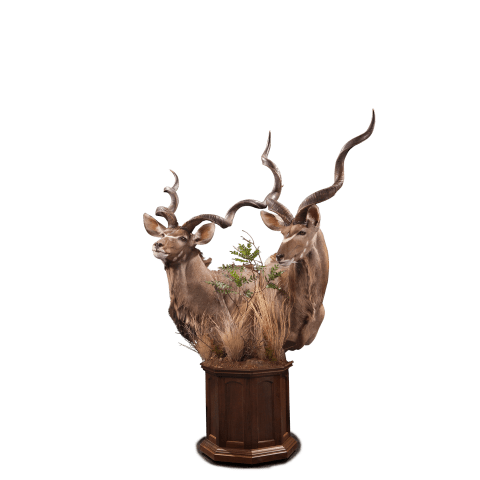 two kudu pedestal taxidermy
