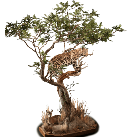 leopard in trees taxidermy