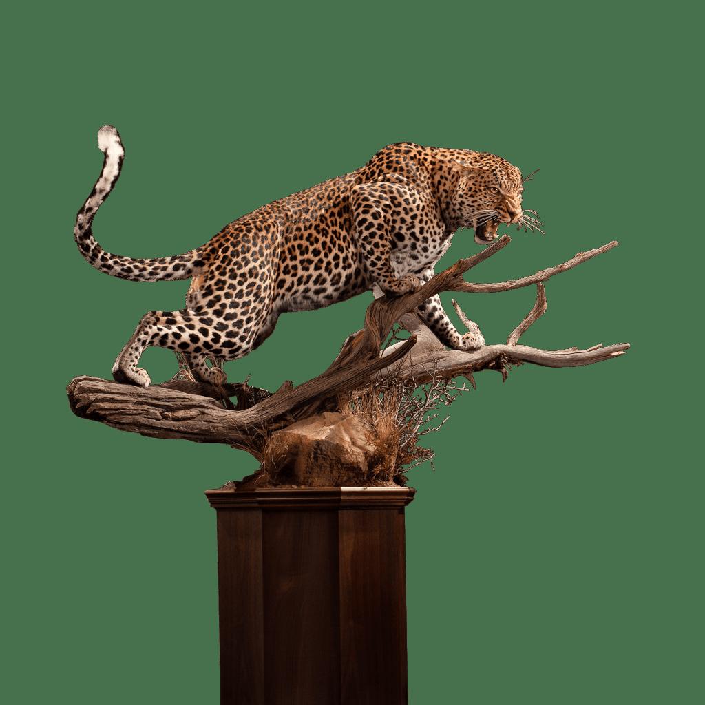 life size leopard replica