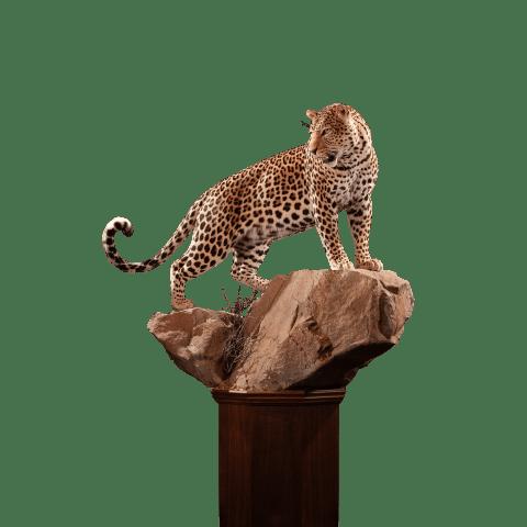 leopard replica on a rock