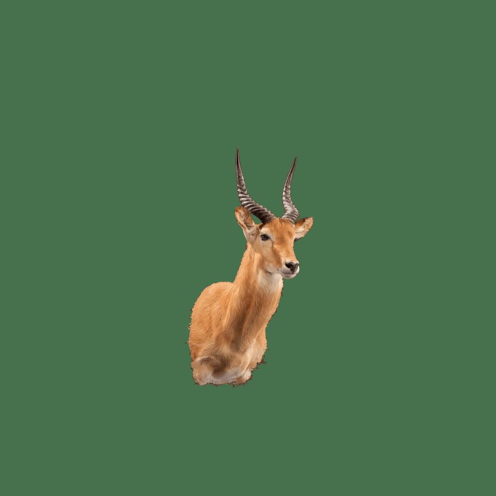 puku shoulder mount