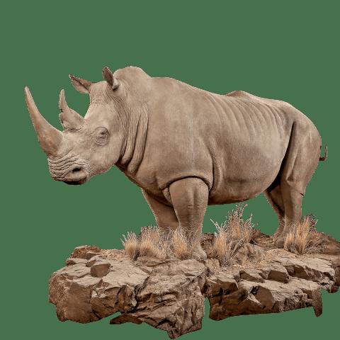 life size rhino replica