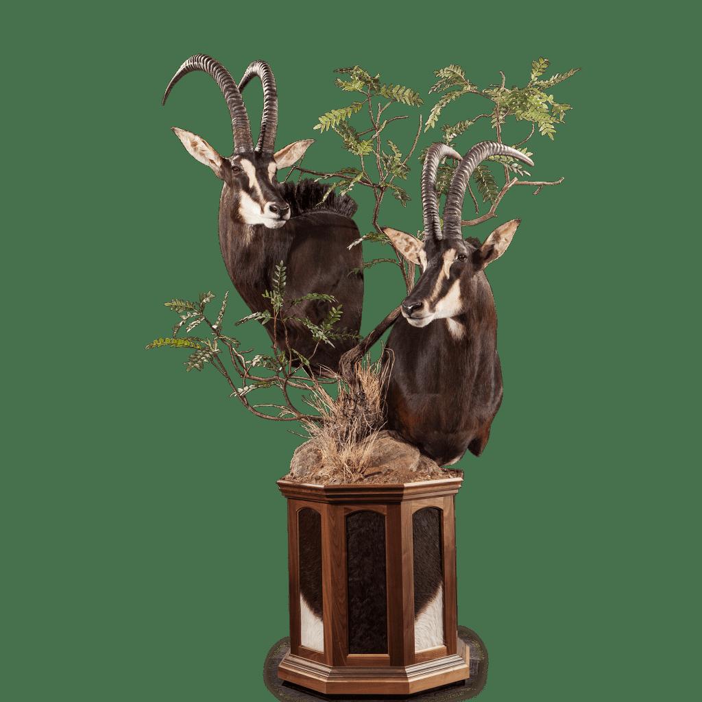 two sables pedestal mount