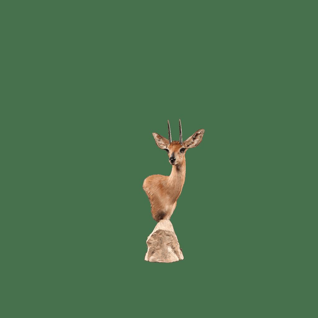 steinbok pedestal