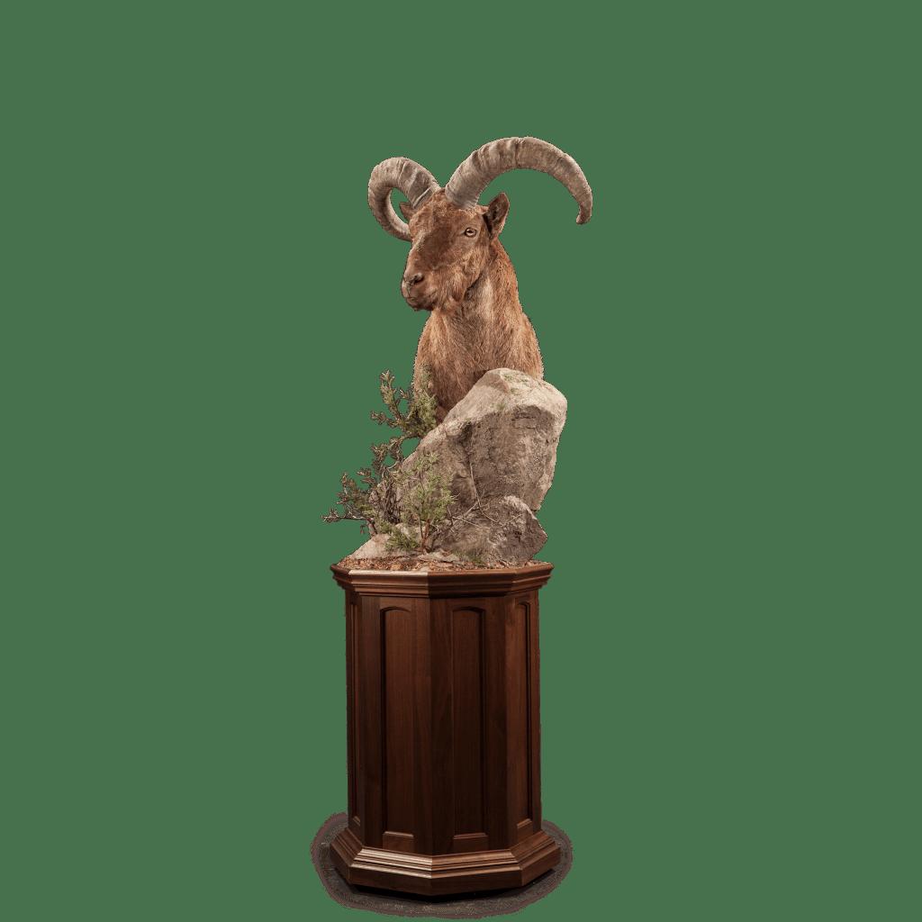 urial shoulder pedestal