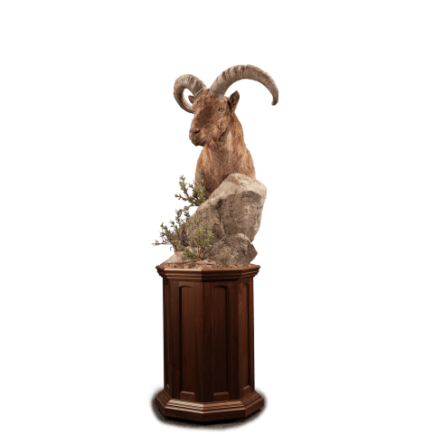 urial shoulder pedestal