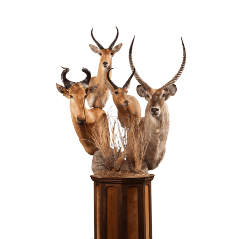 multiple horned african animals pedestal