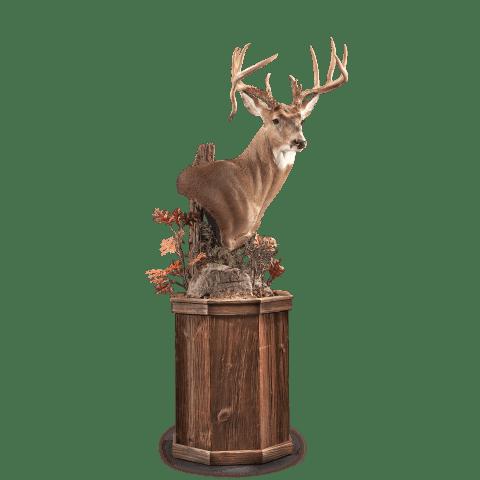 Single whitetail deer head
