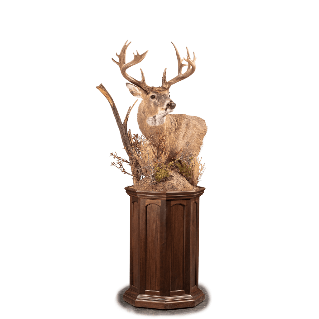 Whitetail deer pedestal