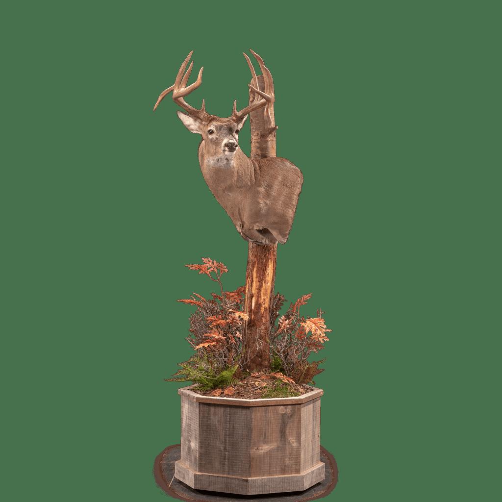 Whitetail deer pedestal