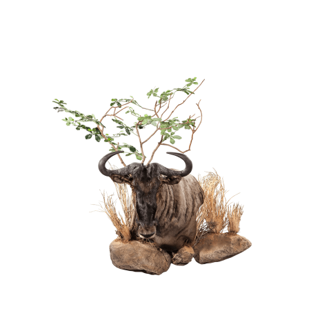 wildebeest pedestal mount