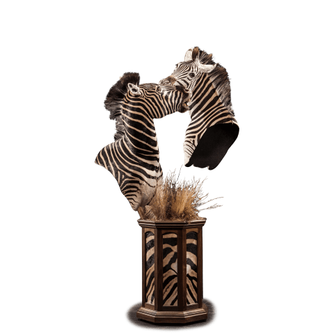 two zebras fighting pedestal