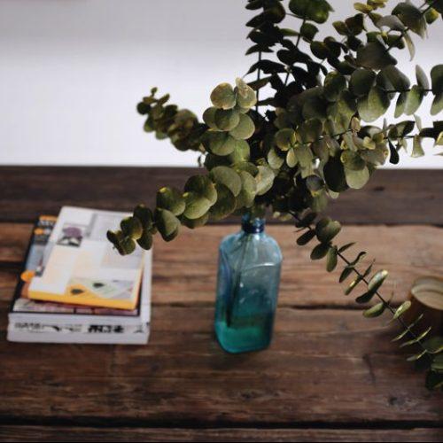 インテリア 観葉植物