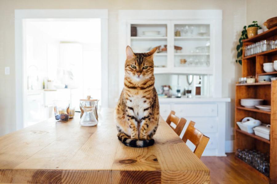 可愛い家 かなう家 猫