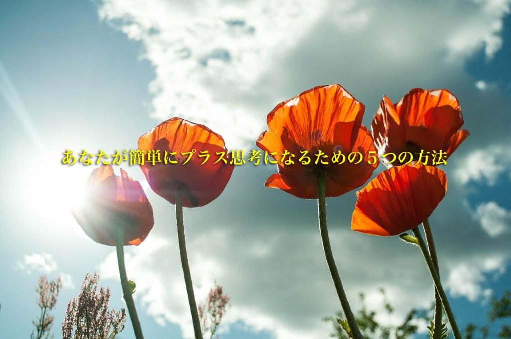flower-399409_12801