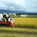 稲刈り 金崎さんちのお米