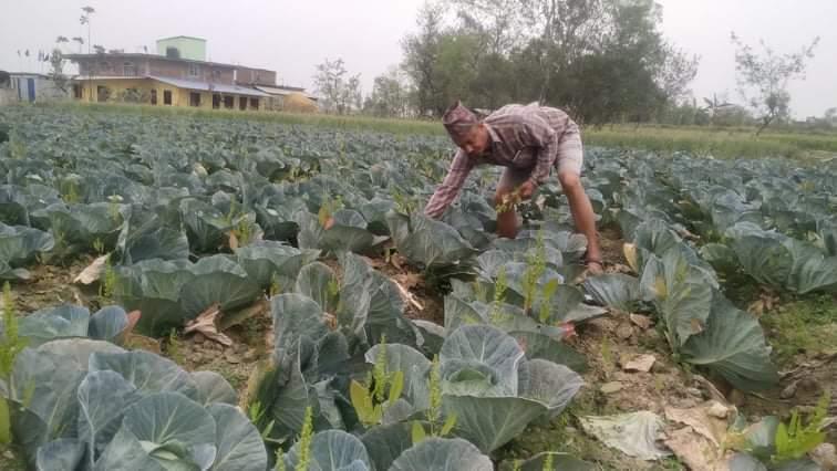 प्रबिधिले सिकाएको कृषि पेशा