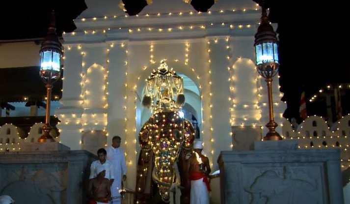 The royal tusker with the golden casket leaving the Temple of Sacred Tooth Relic