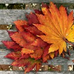 火災保険|紅葉の秋・・枯葉詰まりでの水漏れ事故に注意