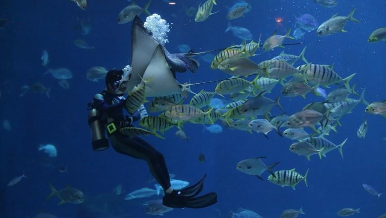 Ciri Ikan Louhan Dan Jenisnya Yang Paling Terkenal