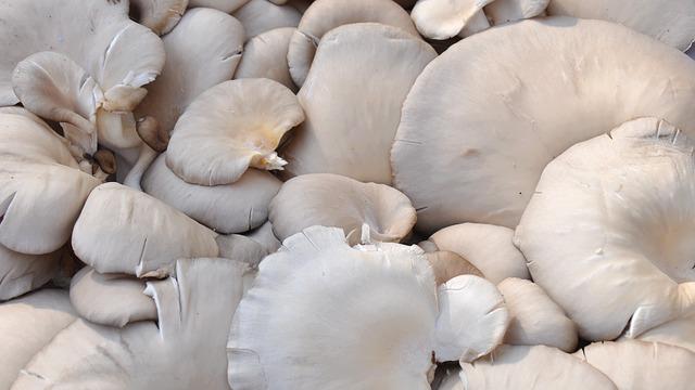 Konsumsi Jamur Bagus Untuk Perkembangan Otak Janin