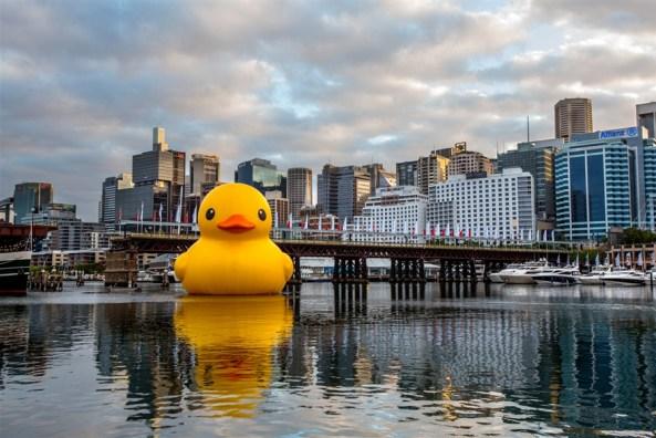 Rubber Duck in Sydney Harbor, Jan. 3, 2013