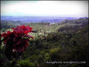 Pemandangan dari gardu pandang goa seplawan pruworejo