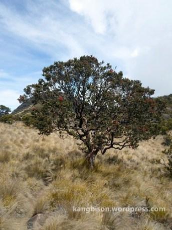 pohon dan sabana pendakian gunung lawu dari cetho