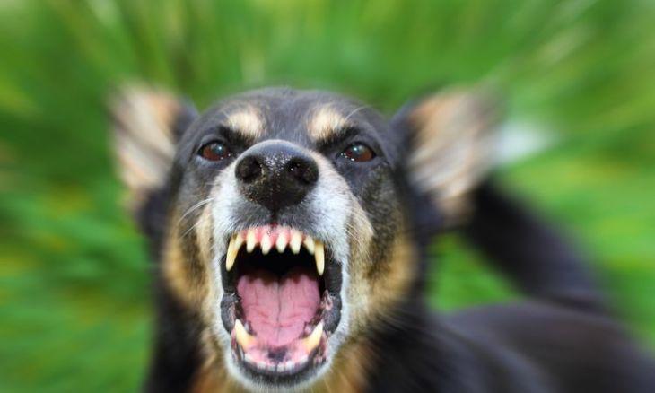 makna kata anjing dalam bahasa sunda