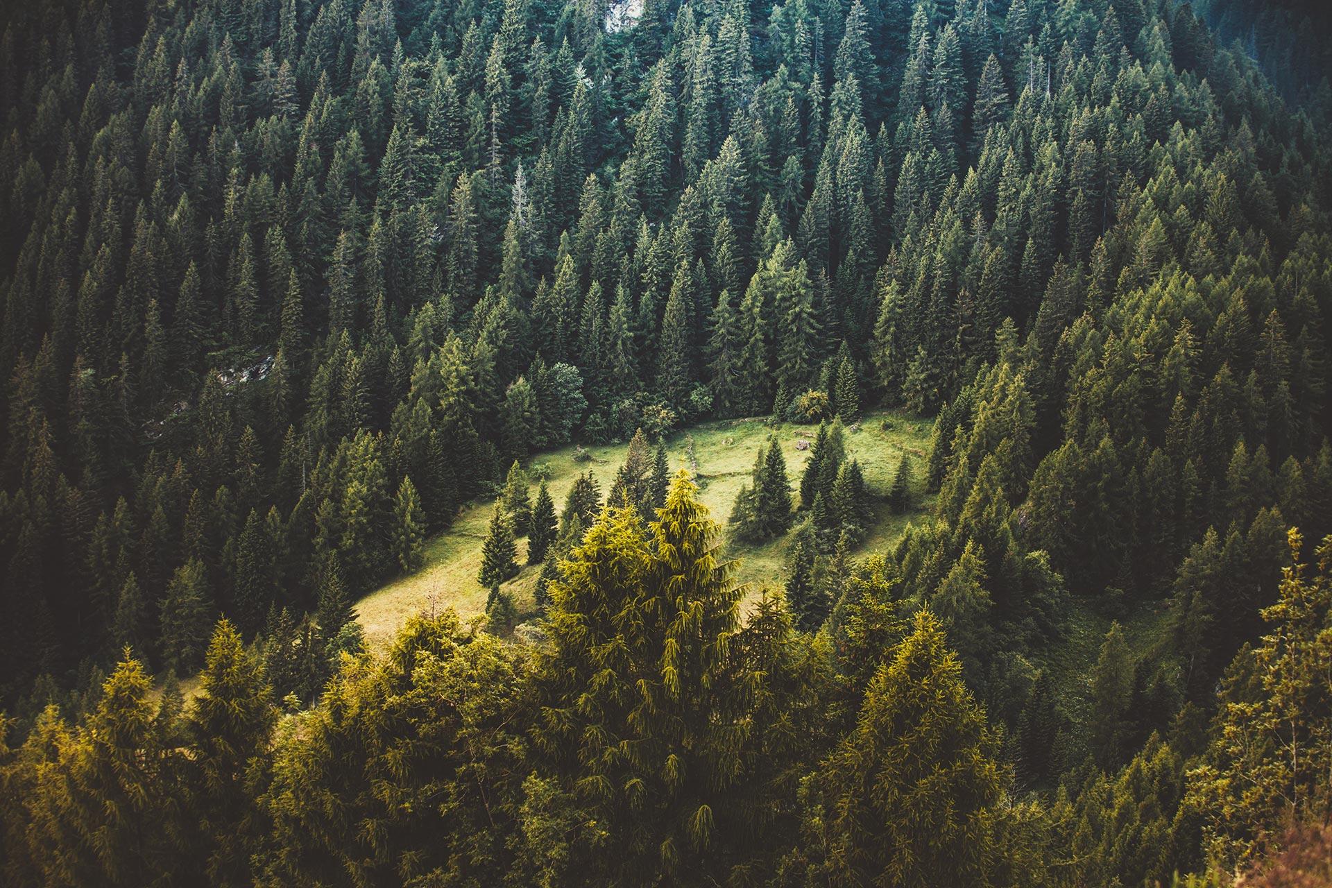 Natur im Schwarzwald