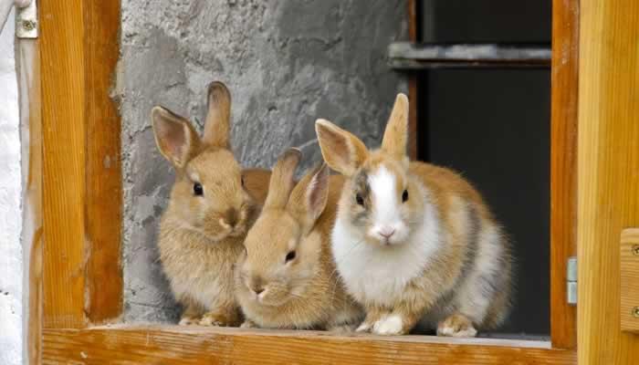 Kaninchenstall-Standort