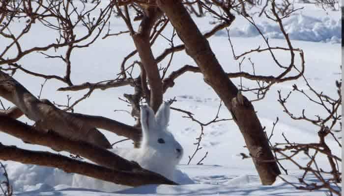 Kaninchenstall dämmen