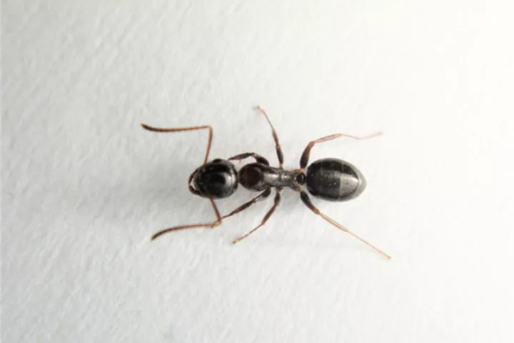 蟻(アリ・あり)