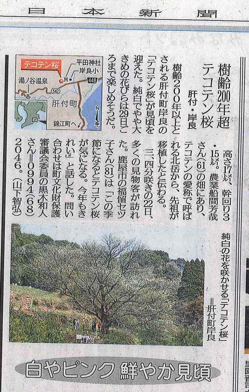 南日本新聞てこてん桜.jpg