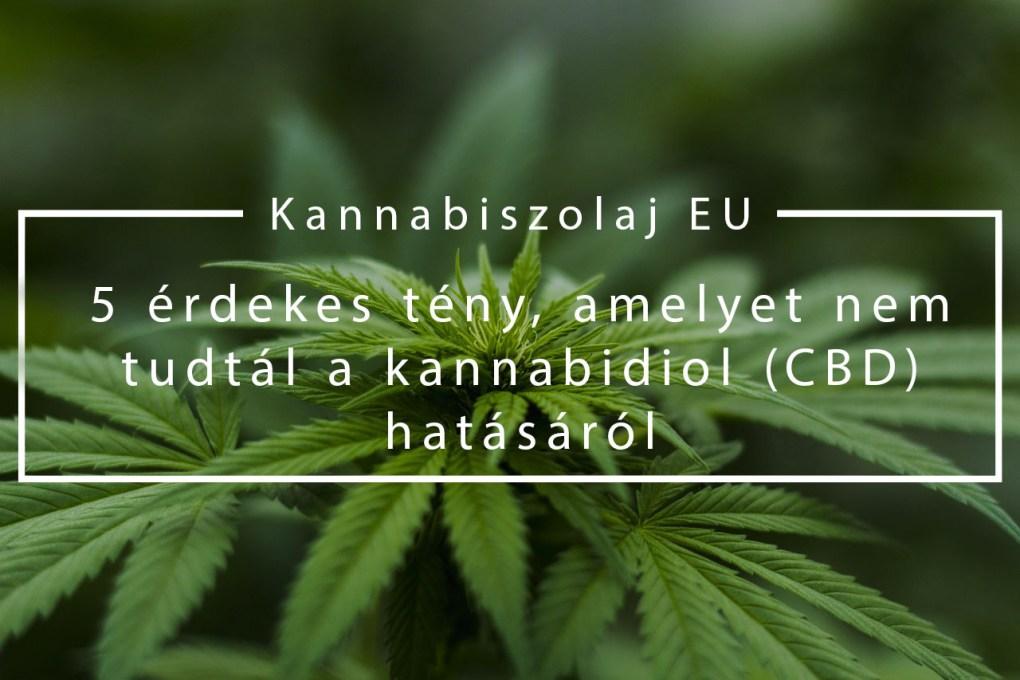 (Kannabiszolaj EU) 5 érdekes tény, amelyet nem tudtál a kannabidiol (CBD) hatásáról