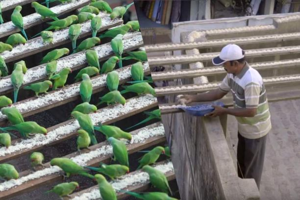 birdman-of-Chennai