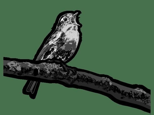 Rotkehlchen digitale Zeichnung
