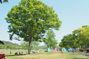 希望が丘文化公園でピクニック