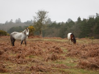 Ponies in the New Forest